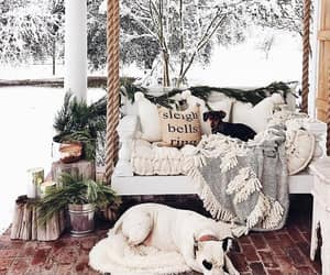 animals, dogs, and porch image