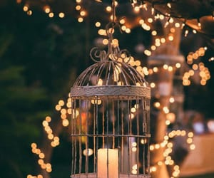 cage, light, and lumiere image
