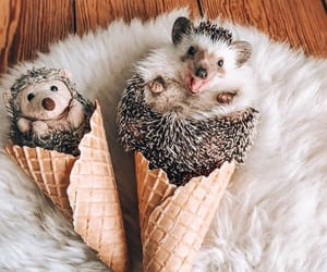 adorable, animals, and cone image