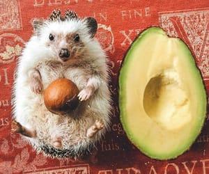 animal, avocado, and cute image