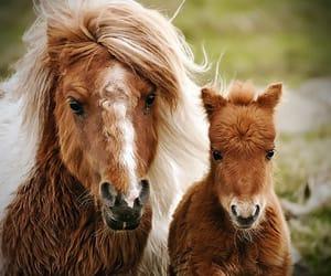 Animales, caballo, and naturaleza image