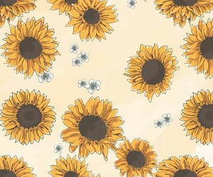 sunflower, wallpaper, and flores image