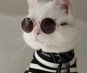 cat, animal, and chanel image