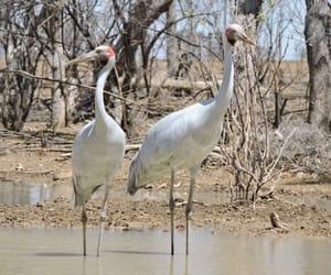 australia, bush, and birds image