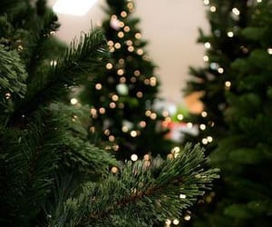tree, christmas, and lights image