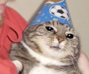 cat, funny, and hat image