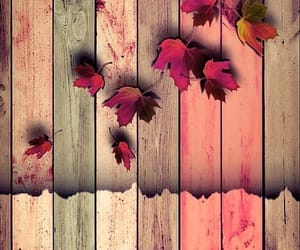 autumn, background, and wallpaper image