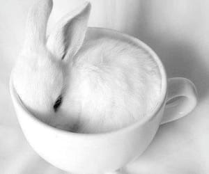 bunny, cute animals, and white image