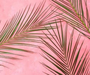 pink, wallpapers, and backgrounds image
