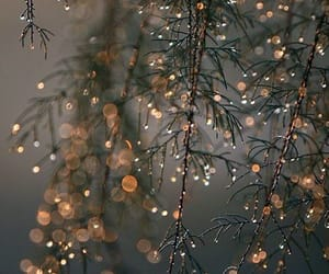 light, winter, and tree image