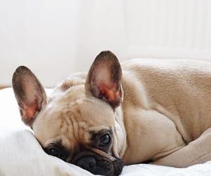 animal, dog, and cute image