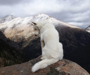 nature, dog, and mountains image