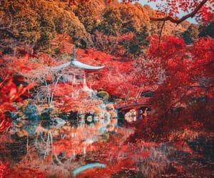 autumn, fall, and kyoto image