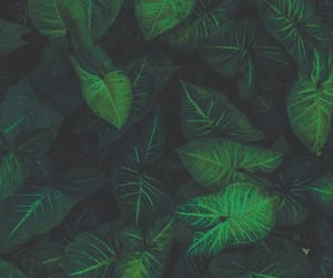 wallpaper and green image