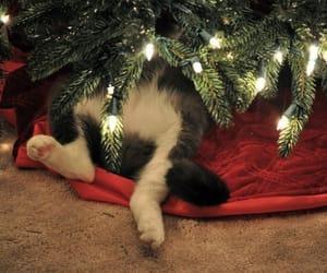 christmas, cat, and christmas tree image