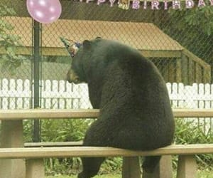 bear, meme, and birthday image