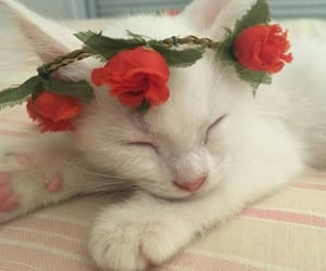 cat, rose, and cute image