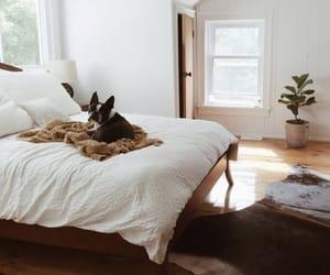 dog, home, and room image