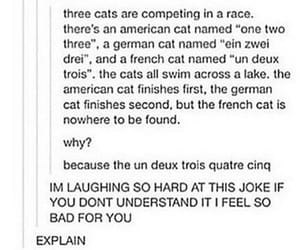 american, cats, and french image
