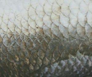 mermaid, scales, and fantasy image