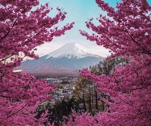 beautiful, japan, and nature image