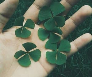 green, plants, and luck image