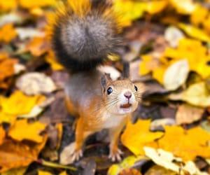 autumn, animals, and squirrel image