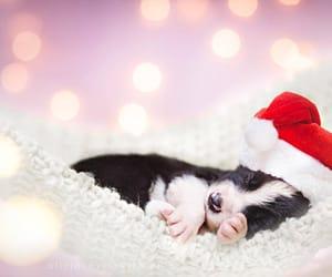festive, adorable, and christmas image