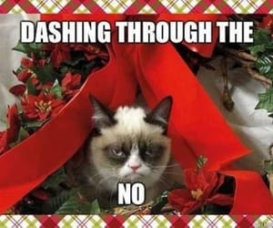 cat, holiday, and meme image