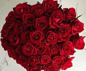 flowers, red, and red roses image