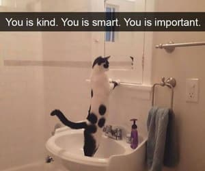 cat, mirror, and quotes image
