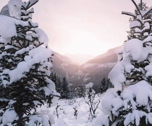 forest, winter, and backgrounds image
