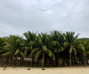 china, coconut, and green image