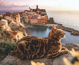 cat, sea, and animal image