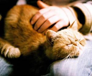 Animais, animals, and felinos image