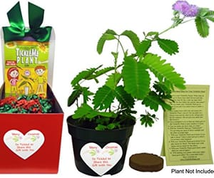 christmas, gardening, and party favors image