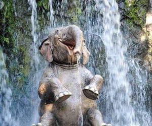 animals, elephant, and wildlife image