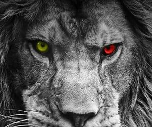 animals, sweet, and wildlife image