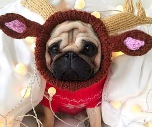 christmas, dog, and pet image