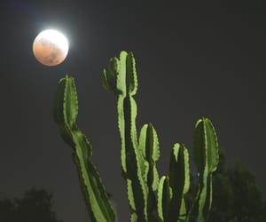 cactus, full moon, and plant image