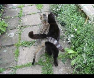 cat, walking, and feline image