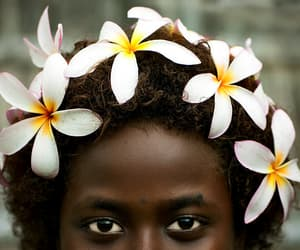 papua new guinea, flowers, and picture image