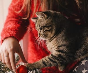 cats, christmas, and happy new year image