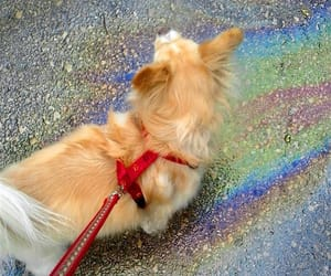 colors, dogs, and puppy image