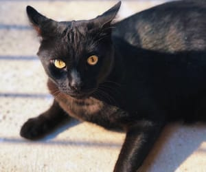 black and cat image