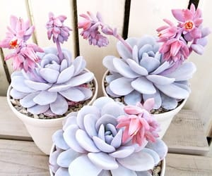 flowers, plants, and pink image
