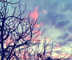 branches, photo, and sky image