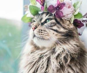 cat, beautiful, and beauty image