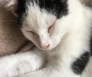 adorable, white, and kittycat image