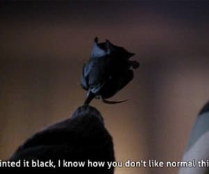 american horror story, black, and rose image